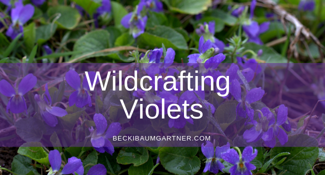 Wildcrafting: The Common Violet (Viola Odorata)
