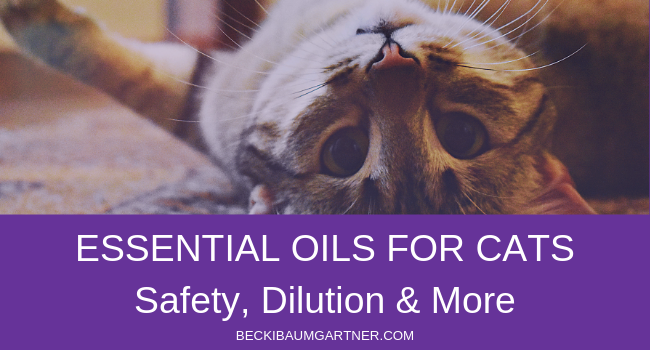 Essential Oils Safe for Cats: Safety, Dilution & More